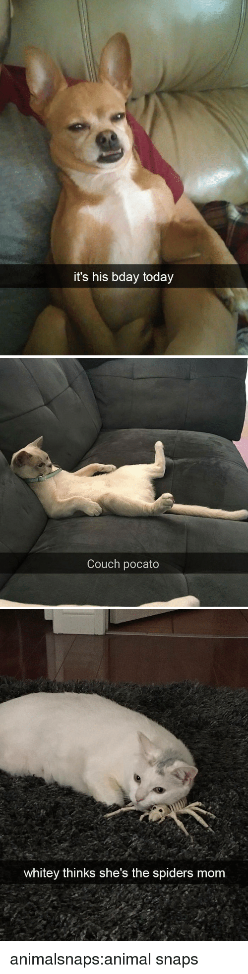 bday: it's his bday today   Couch pocato   whitey thinks she's the spiders mom animalsnaps:animal snaps