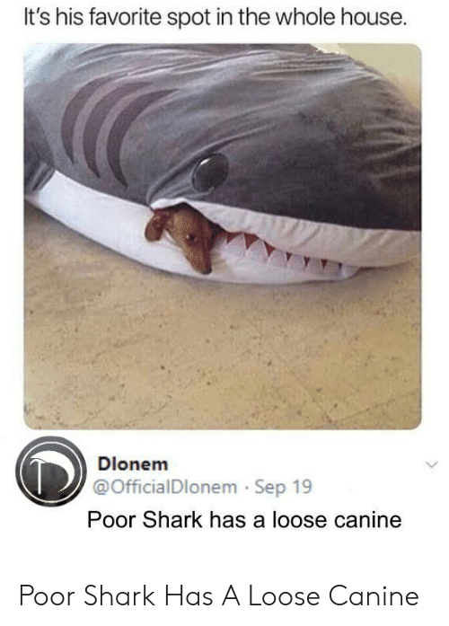 His Favorite: It's his favorite spot in the whole house  Dlonem  @OfficialDlonem Sep 19  Poor Shark has a loose canine Poor Shark Has A Loose Canine