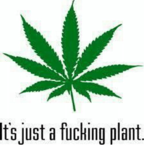 Just, Plant, and Its Just A: Its  just a fuchina plant.