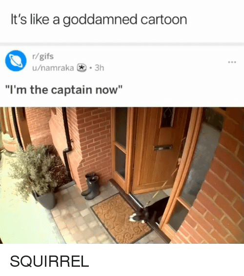 """Im The Captain Now: It's like a goddamned cartoon  r/gifs  u/namraka .3h  """"I'm the captain now"""" SQUIRREL"""