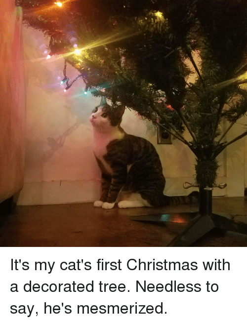 mesmerized: It's my cat's first Christmas with a decorated tree. Needless to say, he's mesmerized.