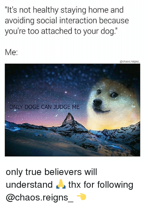"""doges: """"It's not healthy staying home and  avoiding social interaction because  you're too attached to your dog.  Me:  @chaos.reigns  ONLY DOGE CAN JUDGE ME only true believers will understand 🙏 thx for following @chaos.reigns_ 👈"""