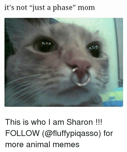 "Animals Meme: it's not ""just a phase"" mom This is who I am Sharon !!! FOLLOW (@fluffypiqasso) for more animal memes"