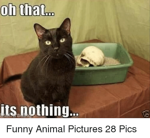 Funny, Animal, and Pictures: its nothing Funny Animal Pictures 28 Pics