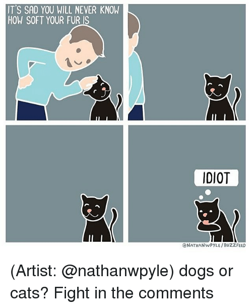 cat fighting: IT'S SAD YOU WILL NEVER KNOW  HOW SOFT YOUR FUR IS  IDIOT  CNATHANwPYLE /BUZZFEED (Artist: @nathanwpyle) dogs or cats? Fight in the comments