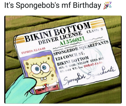 Birthday, SpongeBob, and Bikini Bottom: It's Spongebob's mf Birthday  BIKINI BOTTOM  DRIVER LICENSE CLASS: S  A1356021  EXPIRES: 12-11-03  SPONGEBOB SQUAREPANTS  124 CONCH ST.  BIKINI BOTTOM  SEN: AIR: YELLOW ENES:BiU  T: 00 WT:o DOB.07-146  010  5%