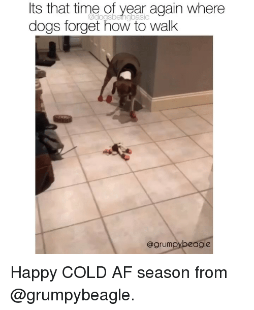 Af, Dogs, and Memes: Its that time of year again where  dogs forget how to walk  @dogsbeingbasic  @grumpybeagle Happy COLD AF season from @grumpybeagle.