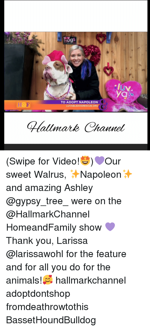 Hallmarkchannel: IUV  yg  H&E  TO ADOPT NAPOLEON  VABLEDOGRESCUE.ORG  LU (Swipe for Video!🤩)💜Our sweet Walrus, ✨Napoleon✨and amazing Ashley @gypsy_tree_ were on the @HallmarkChannel HomeandFamily show 💜 Thank you, Larissa @larissawohl for the feature and for all you do for the animals!🥰 hallmarkchannel adoptdontshop fromdeathrowtothis BassetHoundBulldog