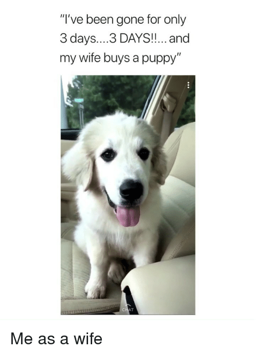 """Puppy, Girl Memes, and Wife: """"I've been gone for only  3 days....3 DAYS!!... and  my wife buys a puppy'"""" Me as a wife"""