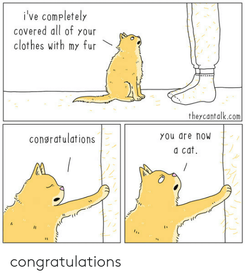 Clothes, Congratulations, and Cat: i've completely  COvered all of your  clothes with my fur  w  theycantalk.com  consratulations  You are now  a cat congratulations