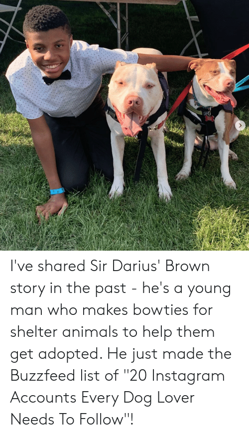 "Animals, Instagram, and Buzzfeed: I've shared Sir Darius' Brown story in the past - he's a young man who makes bowties for shelter animals to help them get adopted. He just made the Buzzfeed list of ""20 Instagram Accounts Every Dog Lover Needs To Follow""!"