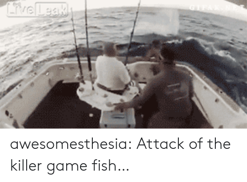 the killer: iveLeak awesomesthesia:  Attack of the killer game fish…