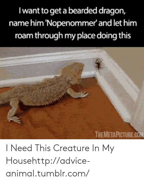 Bearded Dragon: Iwant to get a bearded dragon,  name him 'Nopenommer' and let him  roam through my place doing this  THEMETAPICTURE.COM I Need This Creature In My Househttp://advice-animal.tumblr.com/