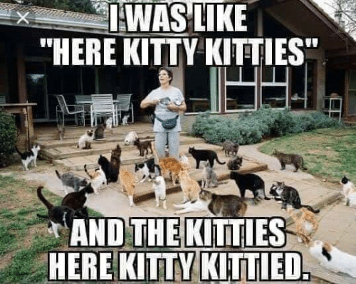 "Kitties, Memes, and 🤖: IWAS LIKE  ""HERE KITTY KITTIES  AND THE KITTIES  HERE KITTY KITTIED"