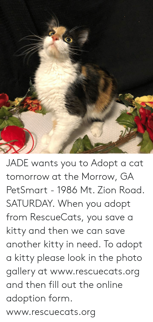 Memes, Petsmart, and Tomorrow: JADE wants you to Adopt a cat tomorrow at the Morrow, GA PetSmart - 1986 Mt. Zion Road. SATURDAY.  When you adopt from RescueCats, you save a kitty and then we can save another kitty in need. To adopt a kitty please look in the photo gallery at www.rescuecats.org and then fill out the online adoption form.  www.rescuecats.org
