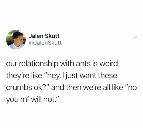 """Ok And: Jalen Skutt  @JalenSkutt  our relationship with ants is weird.  they're like """"hey, I just want these  crumbs ok?"""" and then we're all like """"no  you mf will not."""""""