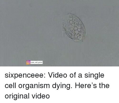 organism: jam. and, geran, sixpenceee:  Video of a single cell organism dying. Here's the original video