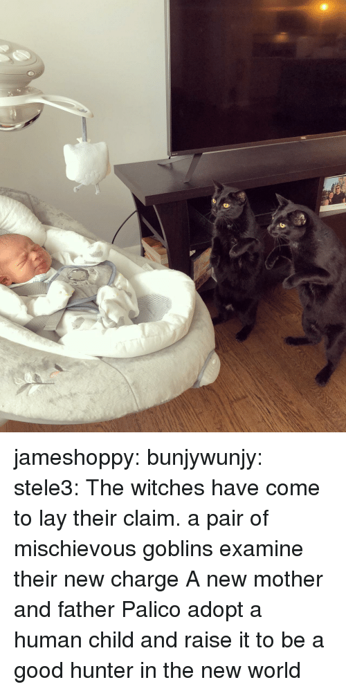 Gif, Tumblr, and Blog: jameshoppy: bunjywunjy:  stele3: The witches have come to lay their claim.   a pair of mischievous goblins examine their new charge   A new mother and father Palico adopt a human child and raise it to be a good hunter in the new world