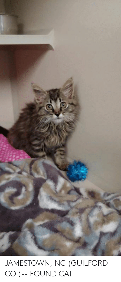 Memes, 🤖, and Cat: JAMESTOWN, NC (GUILFORD CO.)-- FOUND CAT