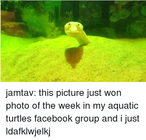 Facebook, Tumblr, and Blog: jamtav: this picture just won photo of the week in my aquatic turtles facebook group and i just ldafklwjelkj