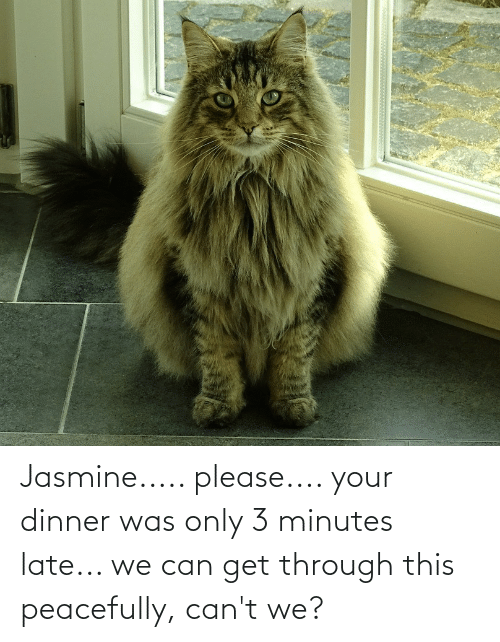 jasmine: Jasmine..... please.... your dinner was only 3 minutes late... we can get through this peacefully, can't we?