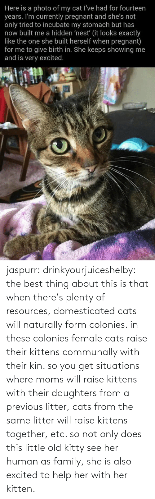 Where: jaspurr:  drinkyourjuiceshelby:    the best thing about this is that when there's plenty of resources, domesticated cats will naturally form colonies. in these colonies female cats raise their kittens communally with their kin. so you get situations where moms will raise kittens with their daughters from a previous litter, cats from the same litter will raise kittens together, etc. so not only does this little old kitty see her human as family, she is also excited to help her with her kitten.