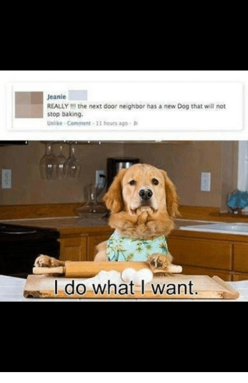 Baking, Dog, and Next: Jeanie  REALLY !!! the next door neighbor has a new Dog that will not  stop baking  Unlike- Comment 11 hours ago  I do what I want