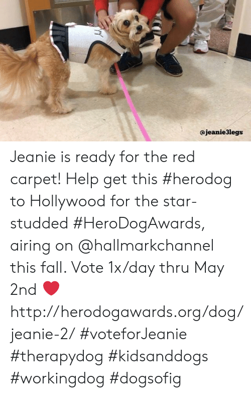 Hallmarkchannel: @jeanie3legs Jeanie is ready for the red carpet! Help get this #herodog to Hollywood for the star-studded #HeroDogAwards, airing on @hallmarkchannel this fall.  Vote 1x/day thru May 2nd ❤️ http://herodogawards.org/dog/jeanie-2/  #voteforJeanie #therapydog #kidsanddogs #workingdog #dogsofig