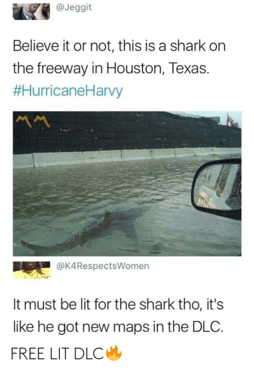 Not This: @Jeggit  Believe it or not, this is a shark on  the freeway in Houston, Texas.  #HurricaneHarvy  @K4RespectsWomen  It must be lit for the shark tho, it's  like he got new maps in the DLC. FREE LIT DLC🔥