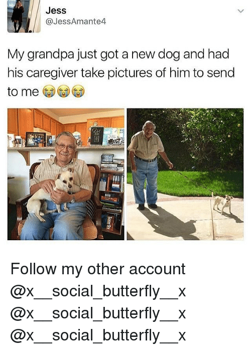 Memes, Grandpa, and Butterfly: Jess  @JessAmante4  My grandpa just got a new dog and had  his caregiver take pictures of him to send  to me Follow my other account @x__social_butterfly__x @x__social_butterfly__x @x__social_butterfly__x