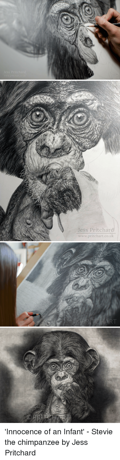 Chimpanzee, Www, and Jess: Jess Pritchar  www.pritchart.co.uk   Jess Pritchard  www.pritchart.co.uk 'Innocence of an Infant' - Stevie the chimpanzee by Jess Pritchard