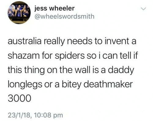 jess: jess wheeler  @wheelswordsmith  australia really needs to invent  shazam for spiders so i can tell if  this thing on the wall is a daddy  longlegs or a bitey deathmaker  3000  23/1/18, 10:08 pm