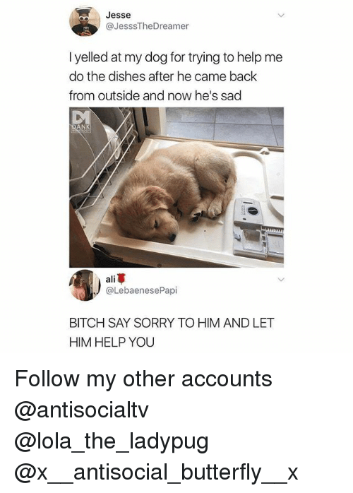 Ali, Bitch, and Memes: Jesse  @JesssTheDreamer  I yelled at my dog for trying to help me  do the dishes after he came back  from outside and now he's sad  ali革  @LebaenesePapi  BITCH SAY SORRY TO HIM AND LET  HIM HELP YOU Follow my other accounts @antisocialtv @lola_the_ladypug @x__antisocial_butterfly__x