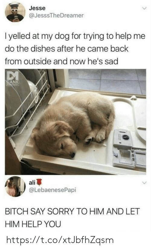 Ali, Bitch, and Dank: Jesse  @JesssTheDreamer  I yelled at my dog for trying to help me  do the dishes after he came back  from outside and now he's sad  DANK  ali  @LebaenesePapi  BITCH SAY SORRY TO HIM AND LET  HIM HELP YOU https://t.co/xtJbfhZqsm