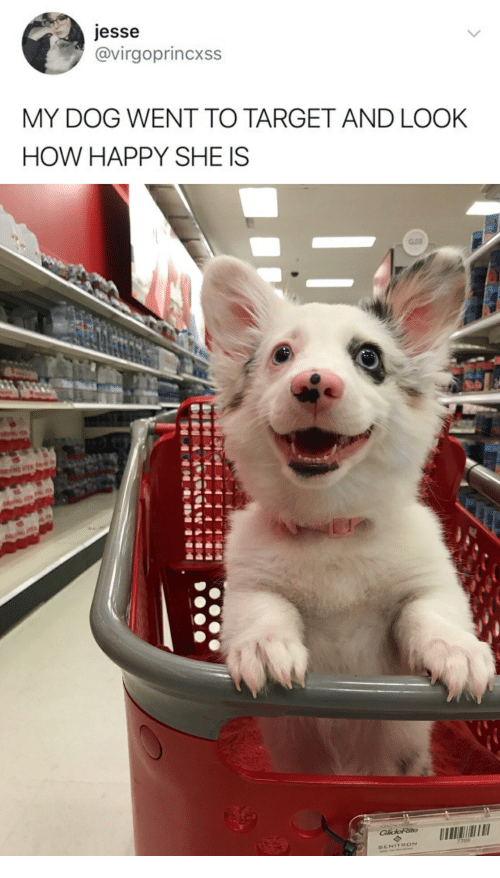 Target Happy And How Jesse Virgoprincxss MY DOG WENT TO TARGET AND