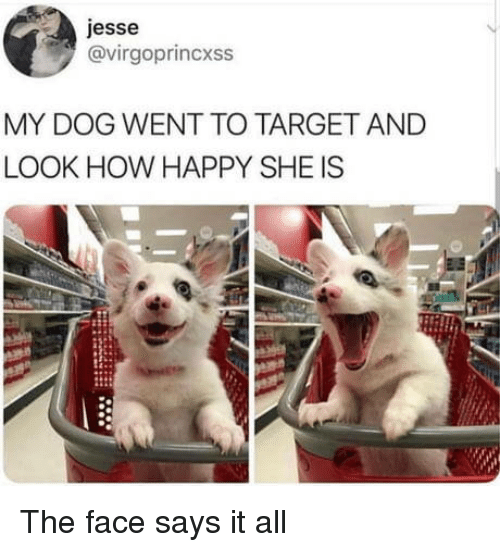 Target, Happy, and How: jesse  @virgoprincxss  MY DOG WENT TO TARGET AND  LOOK HOW HAPPY SHE IS The face says it all