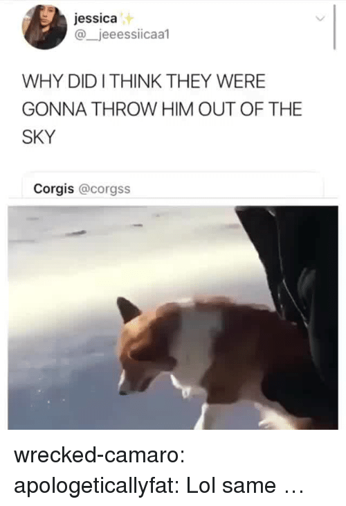 Corgis: jessica  @_jeeessiicaal  WHY DIDI THINK THEY WERE  GONNA THROW HIM OUT OF THE  SKY  Corgis @corgss wrecked-camaro:  apologeticallyfat: Lol same …