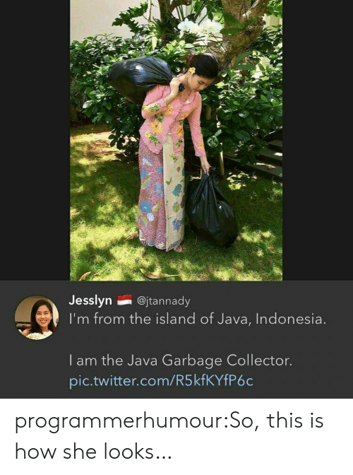 Indonesia: Jesslyn@jtannady  I'm from the island of Java, Indonesia  I am the Java Garbage Collector.  pic.twitter.com/R5kfKYfP6c programmerhumour:So, this is how she looks…