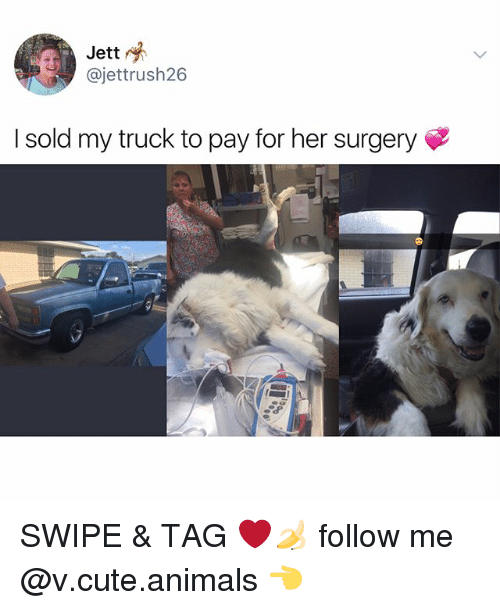 Cute animals: Jett  @jettrush26  I sold my truck to pay for her surgery SWIPE & TAG ❤️🍌 follow me @v.cute.animals 👈