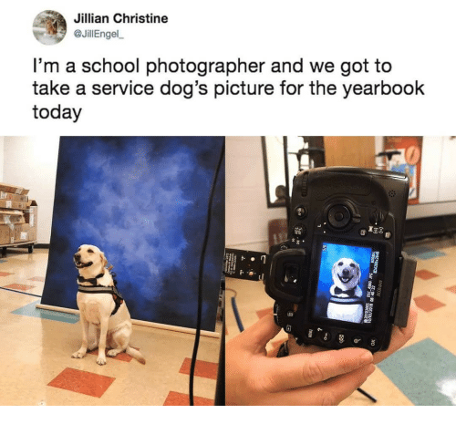 Dogs, School, and Today: Jillian Christine  JillEngel  l'm a school photographer and we got to  take a service dog's picture for the yearbook  today