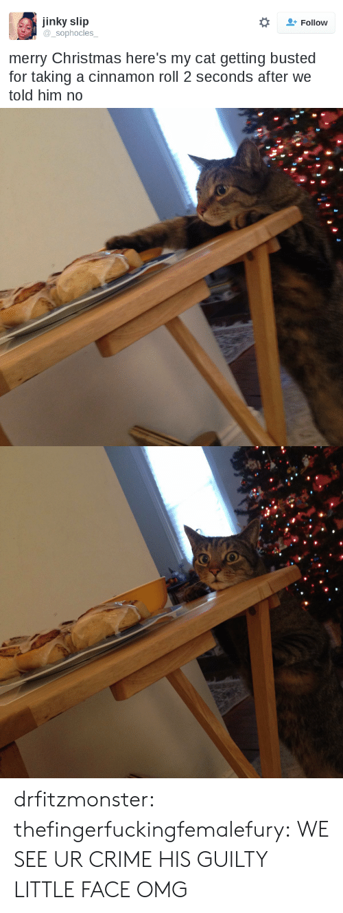 Christmas, Crime, and Omg: jinky slip  sophocles  Follow  merry Christmas here's my cat getting busted  for taking a cinnamon roll 2 seconds after we  told him no drfitzmonster: thefingerfuckingfemalefury:  WE SEE UR CRIME   HIS GUILTY LITTLE FACE OMG