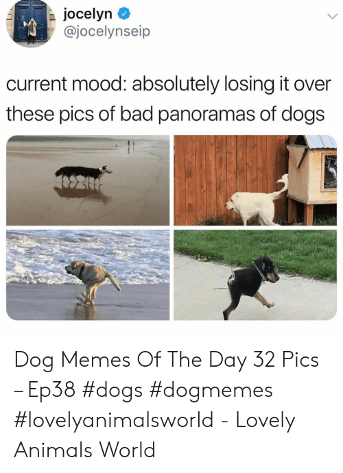 It Over: jocelyn  @jocelynseip  current mood: absolutely losing it over  these pics of bad panoramas of dogs Dog Memes Of The Day 32 Pics – Ep38 #dogs #dogmemes #lovelyanimalsworld - Lovely Animals World