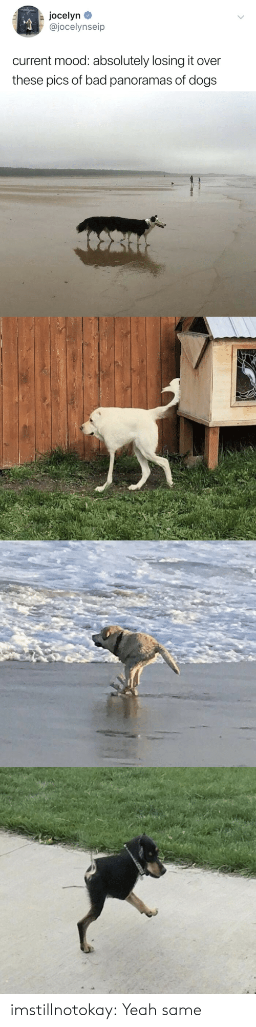 It Over: Jocelyn  @jocelynseip  current mood: absolutely losing it over  these pics of bad panoramas of dogs imstillnotokay:  Yeah same