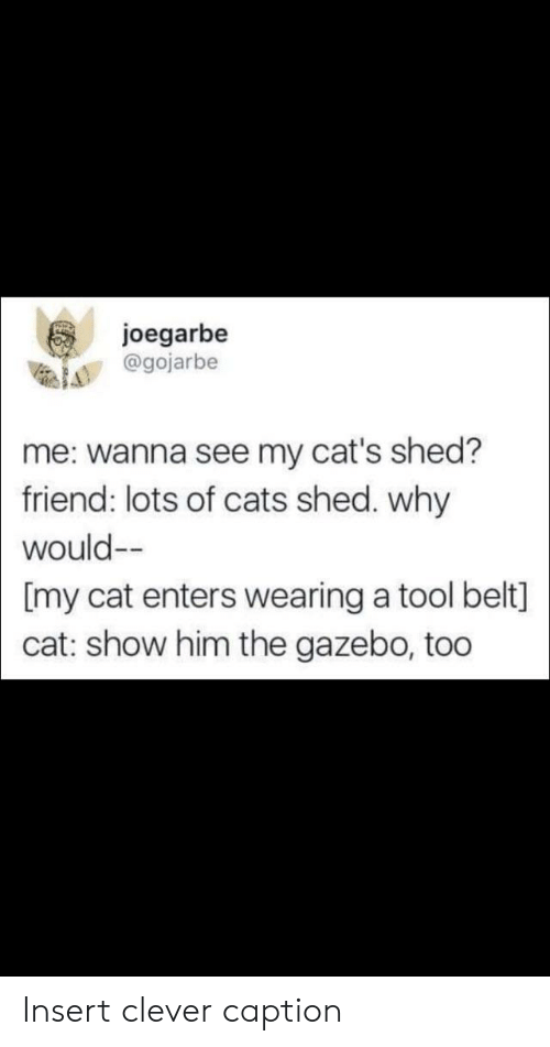 Cats, Reddit, and Tool: joegarbe  @gojarbe  me: wanna see my cat's shed?  friend: lots of cats shed. why  would--  [my cat enters wearing a tool belt]  cat: show him the gazebo, too Insert clever caption