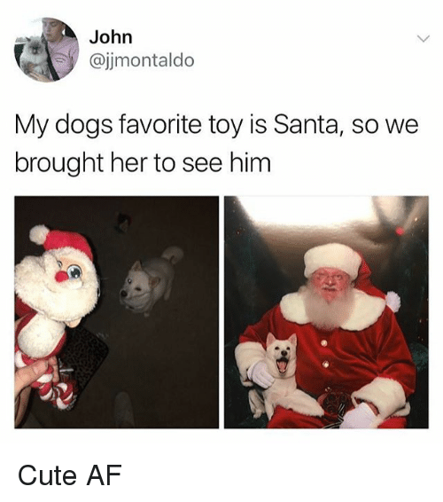 Af, Cute, and Dogs: John  @jimontaldo  My dogs favorite toy is Santa, so we  brought her to see him Cute AF