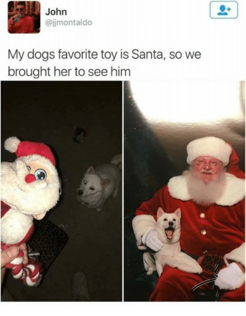 Dogs, Santa, and Her: John  @jjmontaldo  My dogs favorite toy is Santa, so we  brought her to see him