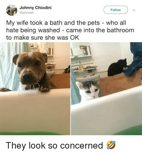 Memes, Pets, and Wife: Johnny Chiodini  @johnneh  Follow  My wife took a bath and the pets - who all  hate being washed came into the bathroom  to make sure she was OK They look so concerned 🤣