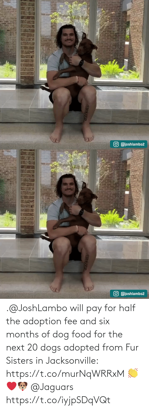 jaguars: .@JoshLambo will pay for half the adoption fee and six months of dog food for the next 20 dogs adopted from Fur Sisters in Jacksonville: https://t.co/murNqWRRxM 👏❤️🐶 @Jaguars https://t.co/iyjpSDqVQt