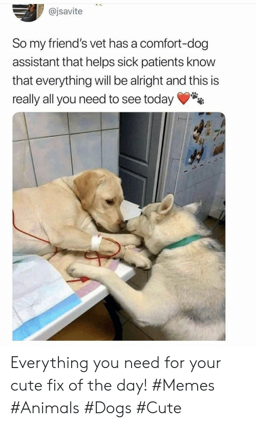 Everything Will: @jsavite  So my friend's vet has a comfort-dog  assistant that helps sick patients know  that everything will be alright and this is  really all you need to see today Everything you need for your cute fix of the day! #Memes #Animals #Dogs #Cute