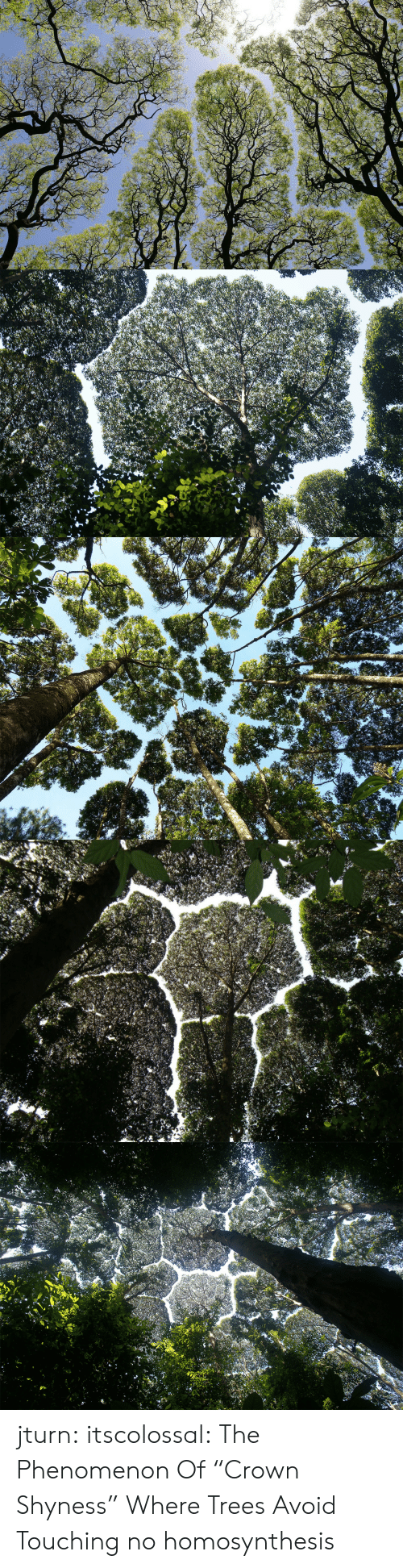 "links: jturn: itscolossal: The Phenomenon Of ""Crown Shyness"" Where Trees Avoid Touching  no homosynthesis"